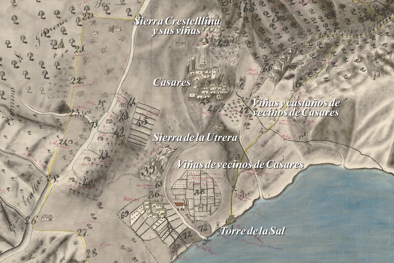 Pasado vitivinícola de Casares (Recorte del plano de Almagro, s. XVIII)