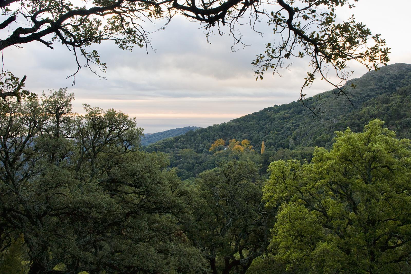 Monte del Duque (Casares)